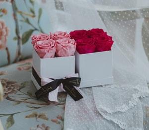 Rosas preservadas - Colección Mónaco