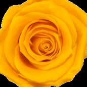 Amarillo cálido