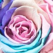 Raimbow Pastel