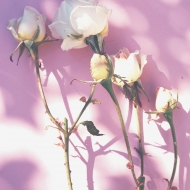Toda mujer merece hermosas rosas. ❤️ Buenos días!#rosestolove #rosaspreservadas #rosaseternas #eternityroses #regalosespeciales #regalarosas #rosasespaña #rosaspreservadasespaña #rosasonline #love #handmade #rosas #home #decohome #deco #nature #deco #decohome #vintage #vintagedeco #vintageinspo #inspodeco #home
