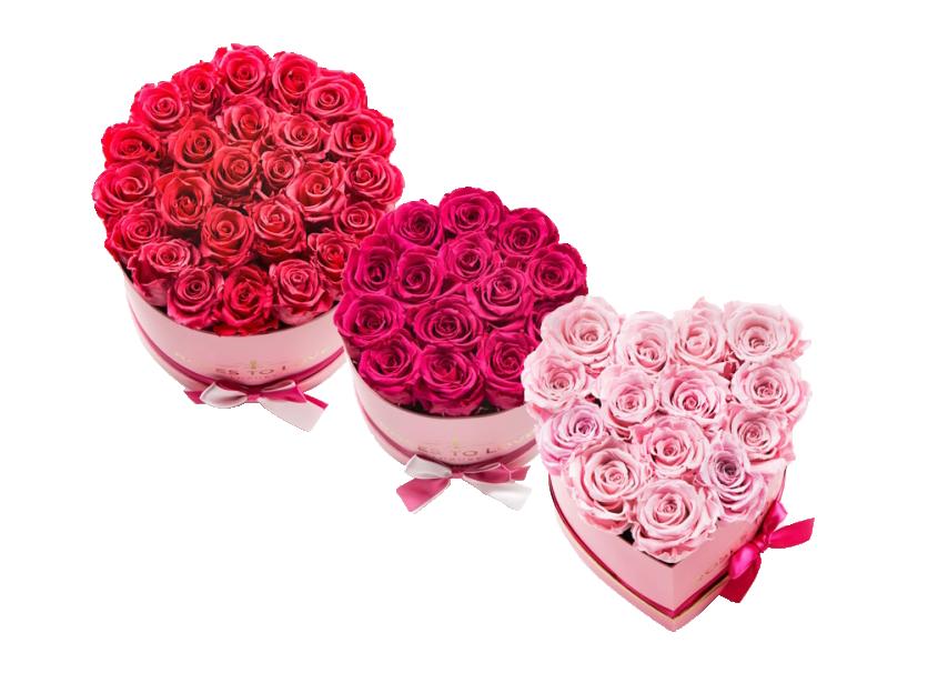 conjunto roses to love